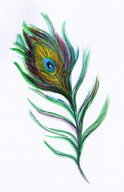 Peacock feather illustration JoVincentArt2018
