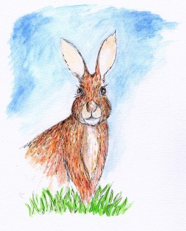 rabbit, hare, watercolour rabit JoVincentArt